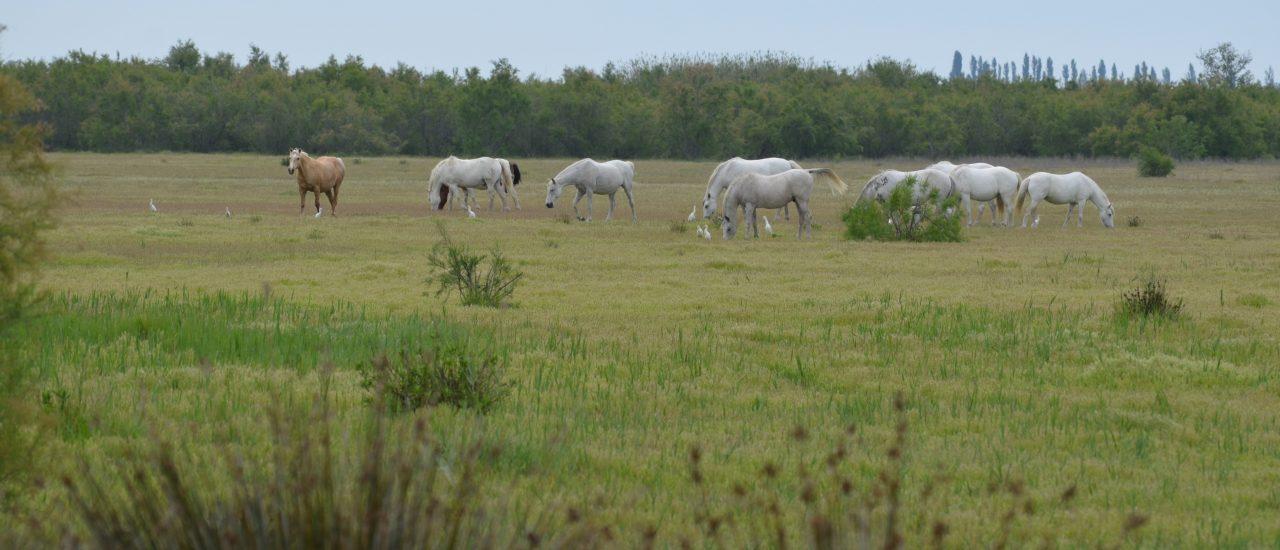 Les chevaux du Verdier